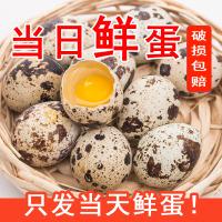 桃小淘 新鲜生鹌鹑蛋25枚 正宗农家散养 宝宝辅食孕妇营养 非鸡蛋鹅蛋鸽子蛋鸭蛋变蛋