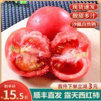 【靓果汇】【顺丰】露天西红柿5斤装 果园新鲜现摘发货 健康营养