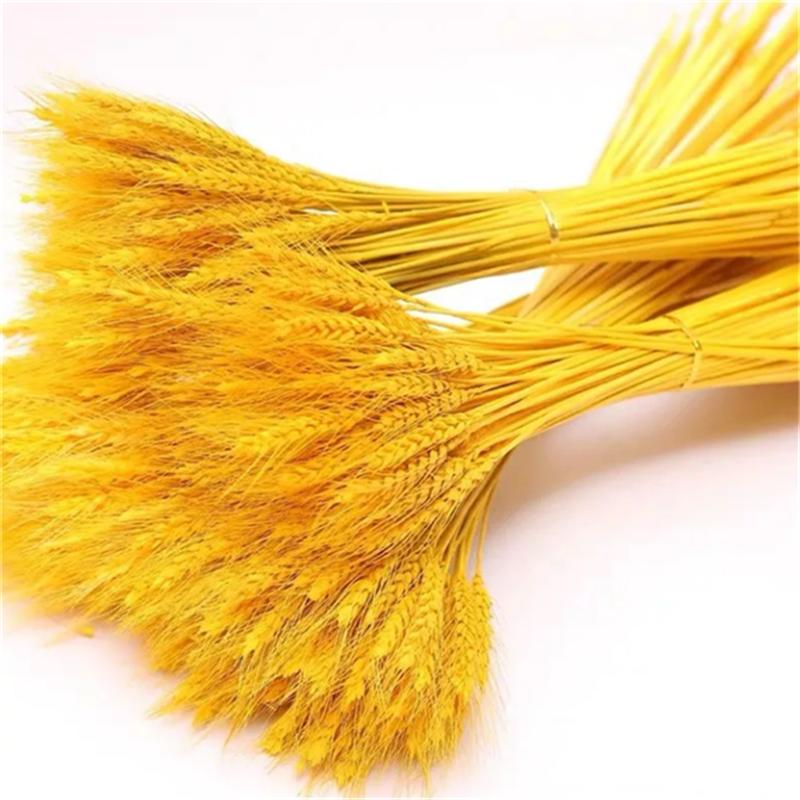 天然麦穗干花花束开业大麦黄金麦穗花束装饰田园装饰礼品道
