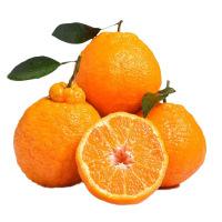 柑爸爸 四川不知火丑柑5斤中大果 丑橘 新鲜采摘 坏果包赔 酸甜口感