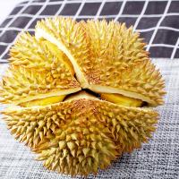 【2件起售】泰国金枕头巴掌榴莲1-1.5斤 需拍2件合并发一个2-3斤单果带箱 热带水果(拍下6天左右发货)